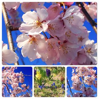 4月♩春!!!